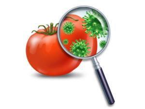 corsi-haccp-sicurezza-alimentare