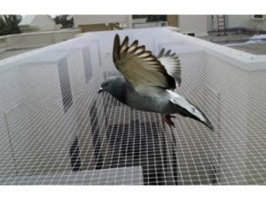 rete-piccioni-allontanamento-volatili