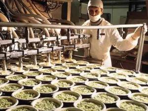 alimentare-industria-cibo-haccp