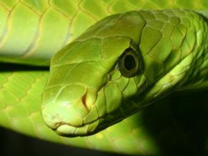 antiofidico-rettili-serpente