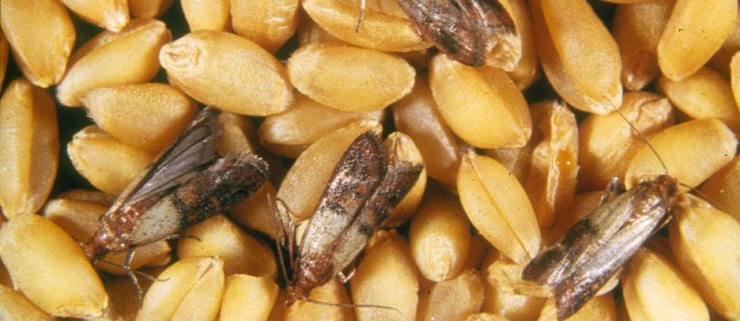 farfalline-dispensa