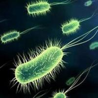 germi-disinfezione-SIADD-Torino