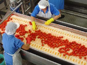 haccp-industria-alimentare-disinfestazione