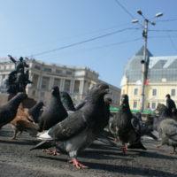 piccioni-piazza-città-allontanamento