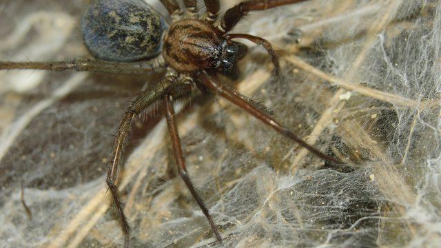 ragno-ragnatela-infestazione