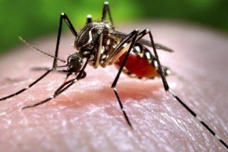 Zanzare – La prevenzione come prima arma