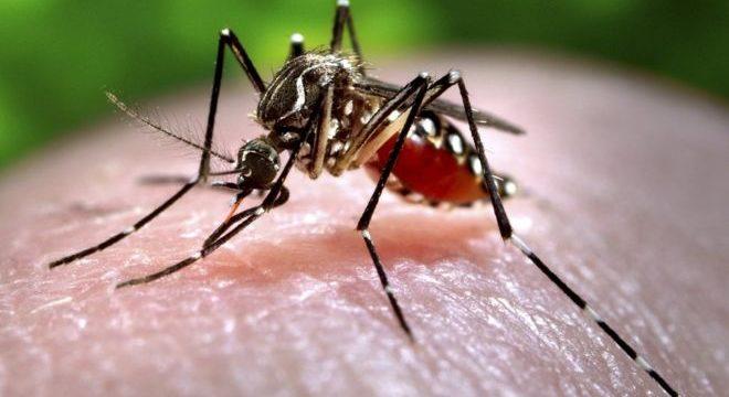 zanzara-puntura-virus