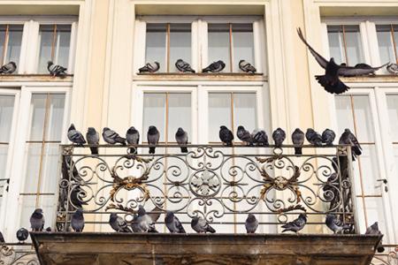 Balconi infestati dai piccioni – Le soluzioni