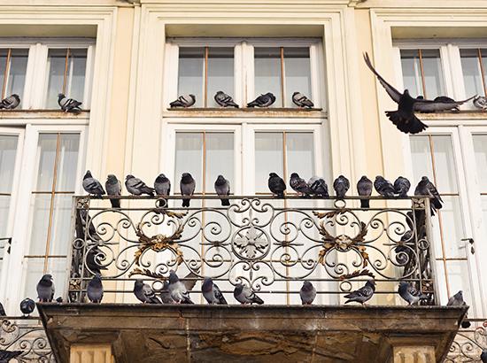balcone-allontanamento-piccioni-colombi