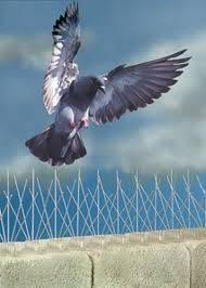 dissuasori-piccione-Torino-SIADD