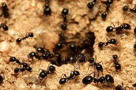 Il risveglio delle formiche – Come intervenire