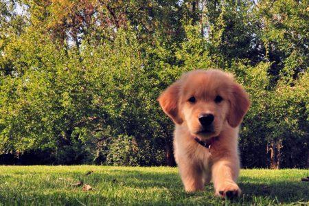 Pappataci – Pericolo per i nostri amici animali