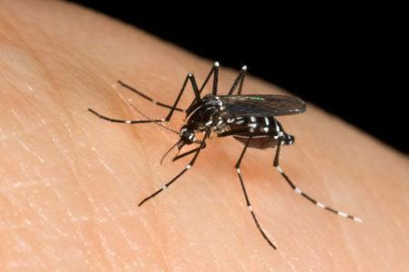 Punture di insetti – Identificare le più comuni