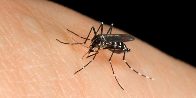 puntura-zanzara