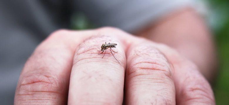 west-nile-zanzare-disinfestazione