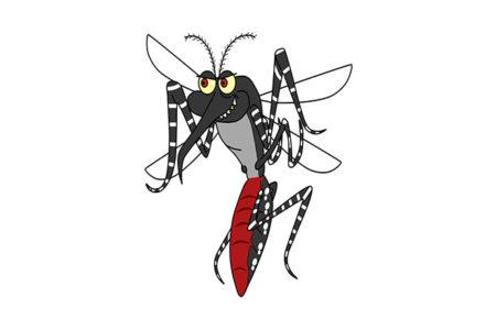 Le zanzare in inverno – Dove vanno?