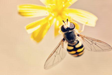 Allontanare le vespe e prevenire l'insediamento nelle nostre case