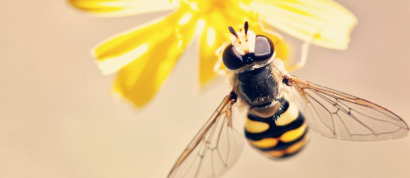 allontanare le vespe